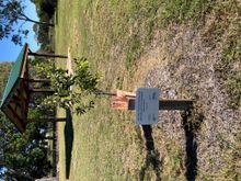 Tree planting at Barolin Nature Reserve