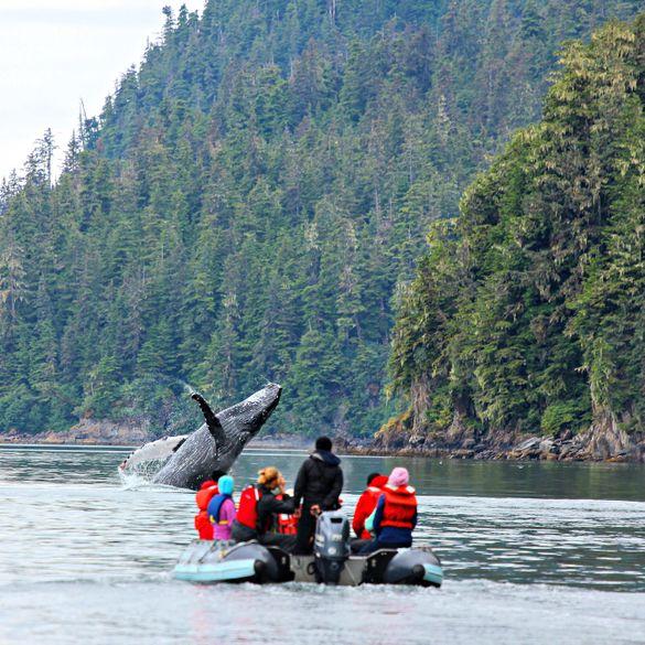 Humpback whale breaches near skiff in SE Alaska