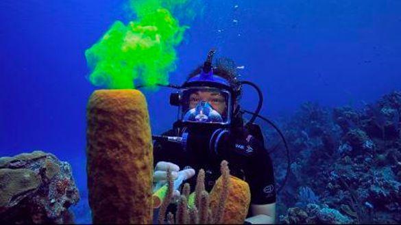 CCMI 'Reefs Go Live' - Little Cayman