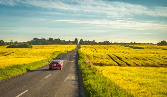 Old-school car driving through yellow fields near Aarhus.