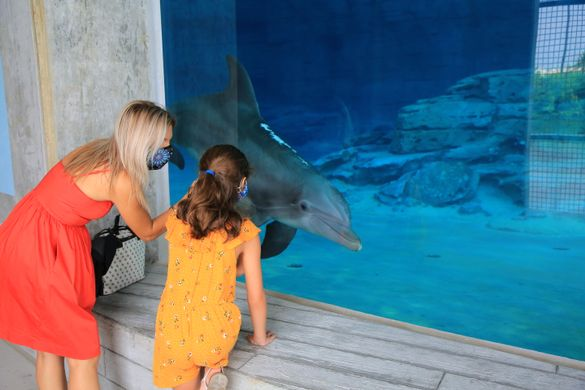 Nicholas the dolphin welcomes guests to the new Stone Dolphin Complex at Clearwater Marine Aquarium (photo courtesy of Clearwater Marine Aquarium).