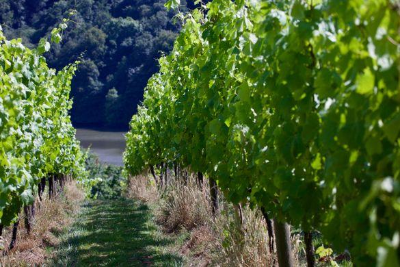 Sharpham Wine