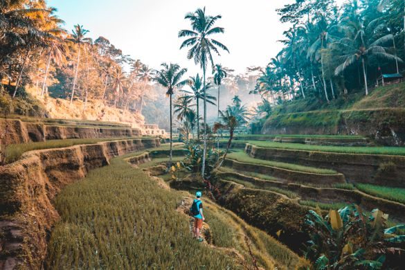 Experience Bali like you never have before with our 3 day 'Into The Wild' Curated Journey, now with a free room.