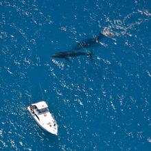 Whale Interaction Tour - Exmouth, Ningaloo Reef
