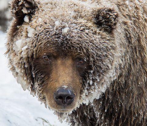 Bear Cave Mountain, Yukon