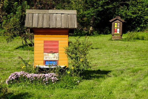 Beehives in the Julian Alps, Slovenia