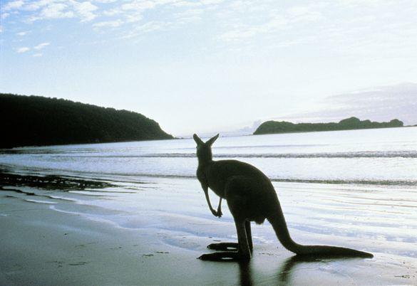 Luxury Lodges of Australia showcases the distinctly Australian era of experiential luxury travel