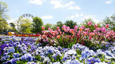 Floriade returns with the theme of Rejuvenate this spring