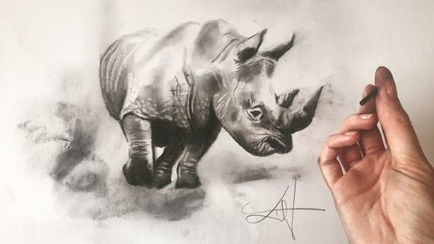 Rhino for Sketch for Survival by Katy Jade Dobson