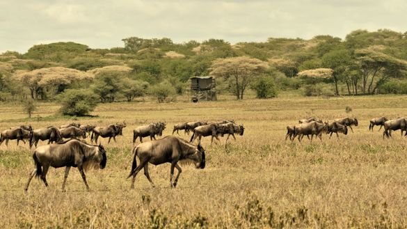 Bush Rover Serengeti