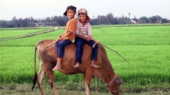 Kid's play in Vietnam