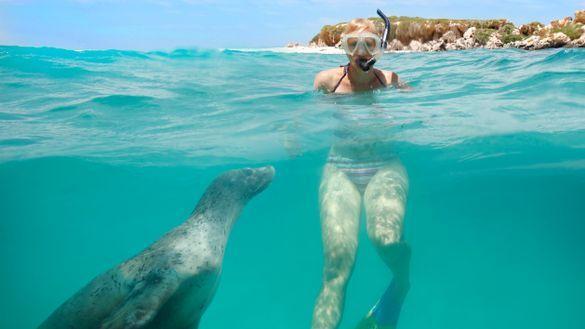 Swimming alongside Australian sea lions at Jurien Bay