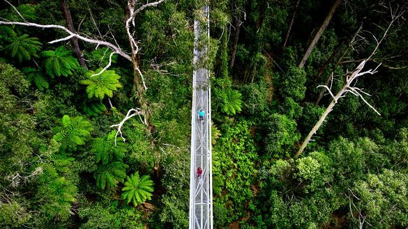 Illawarra Fly Treetop Adventures, Knights Hill